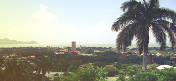 A landscape overlooking a city with a big palm tree at the right.