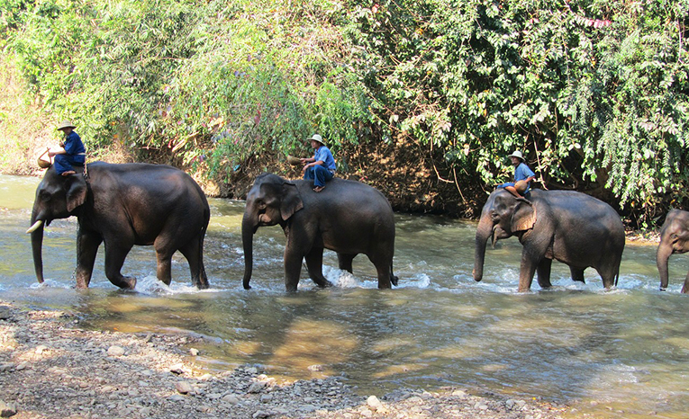 Elephants, Thailand