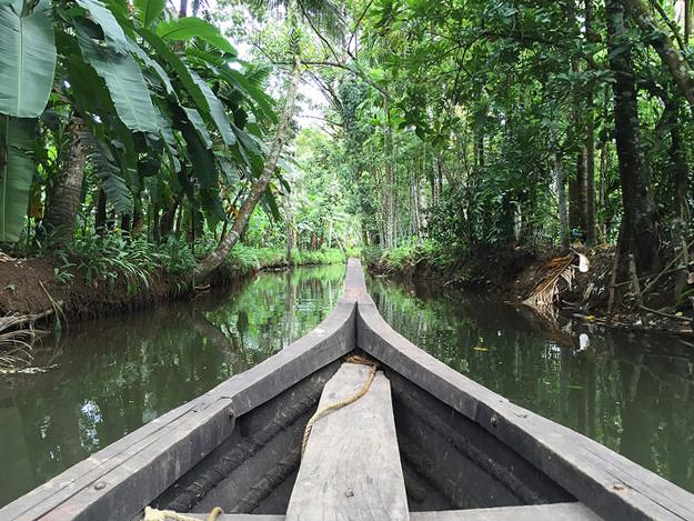 Backwaters in Kerala, India